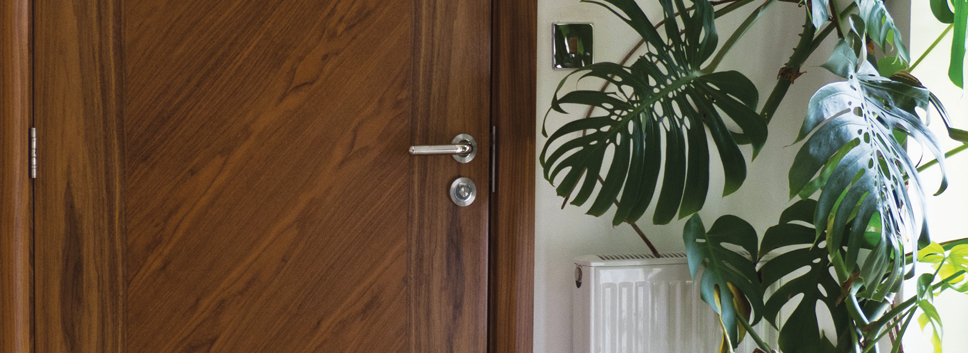 Walnut door with cheeseplant
